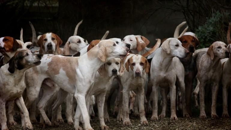 Los mil perros